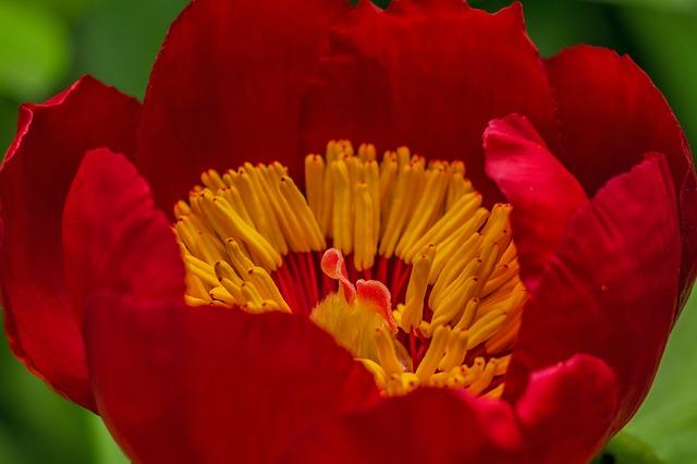 flower-142083_640